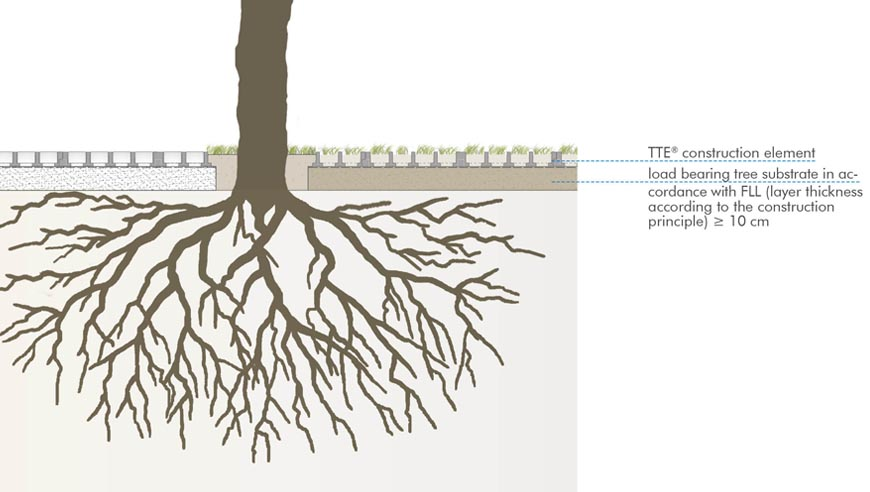 Root protection for old trees in the area